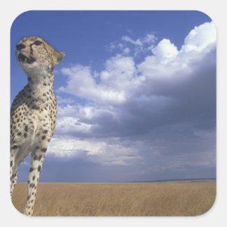 Reserva del juego de África, Kenia, Mara del Pegatina Cuadradas