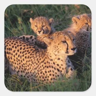 Reserva del juego de África, Kenia, Mara del Calcomanía Cuadradase