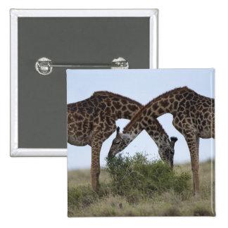 Reserva del juego de África, Kenia, Mara del Pin Cuadrado