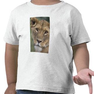 Reserva del juego de África, Kenia, Mara del Camiseta