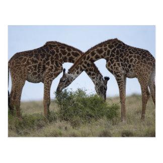 Reserva del juego de África, Kenia, Mara del Postales