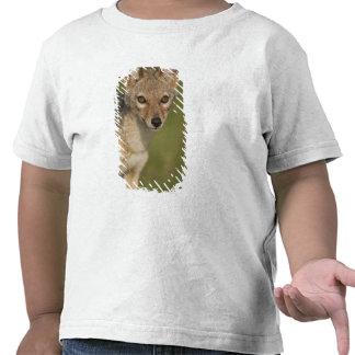 Reserva del juego de Kenia, Mara del Masai. 2 de Camisetas