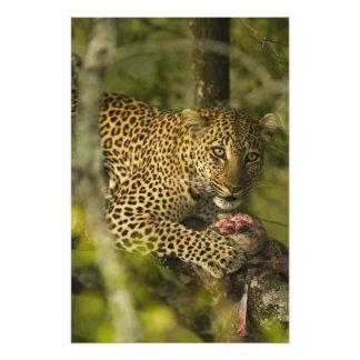 Reserva del juego de Kenia, Mara del Masai. Africa Fotografía