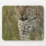 Reserva del juego de Kenia, Mara del Masai. Africa Alfombrillas De Raton