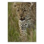 Reserva del juego de Kenia, Mara del Masai. Africa Tarjeta De Felicitación