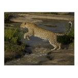 Reserva del juego de Kenia, Mara del Masai. Africa Tarjetas Postales