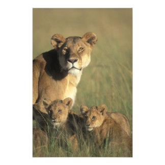Reserva del juego de Kenia, Mara del Masai, cachor Fotografía