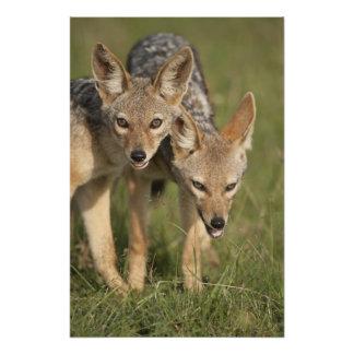 Reserva del juego de Kenia, Mara del Masai. De esp Foto