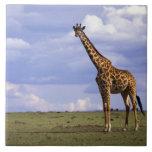 Reserva del juego de Kenia, Mara del Masai. Jirafa Azulejo Cuadrado Grande
