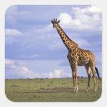 Reserva del juego de Kenia, Mara del Masai. Jirafa Pegatina Cuadrada