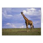 Reserva del juego de Kenia, Mara del Masai. Jirafa Tarjeta De Felicitación
