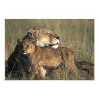 Reserva del juego de Kenia, Mara del Masai, leona Cojinete