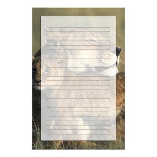 Reserva del juego de Kenia, Mara del Masai, leona Papelería Personalizada