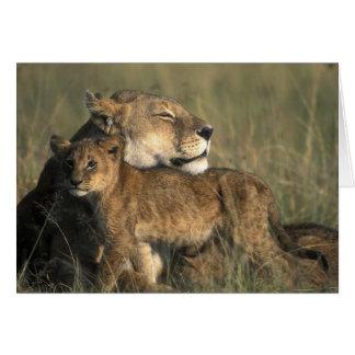 Reserva del juego de Kenia, Mara del Masai, leona Tarjeta De Felicitación