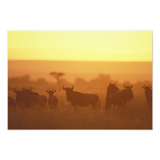 Reserva del juego de Kenia, Mara del Masai, manada Fotografía