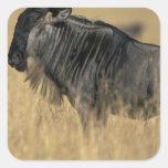 Reserva del juego de Kenia, Mara del Masai, Pegatinas Cuadradases