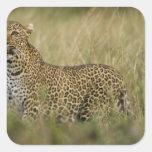 Reserva del juego de Kenia, Mara del Masai. Pegatina Cuadrada