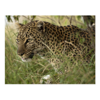 Reserva del juego de Kenia, Mara del Masai. Postales