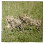 Reserva del juego de Mara superior, Mara del Masai Teja Ceramica