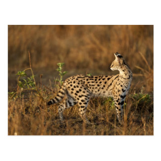 Reserva del juego de Mara superior, Mara del Masai Postal