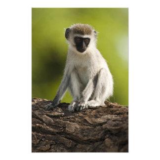 Reserva del juego de Samburu, Kenia, mono de Verve Fotografía