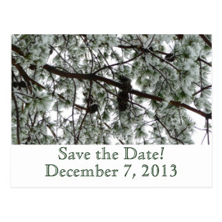 Reserva del pino del invierno la postal de la fech