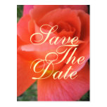Reserva del rosa del verano la invitación del boda tarjeta postal