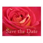 Reserva del rosa la 80.a celebración del tarjetas postales