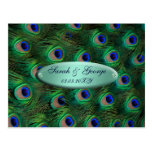 reserva elegante del pavo real de la turquesa la postal
