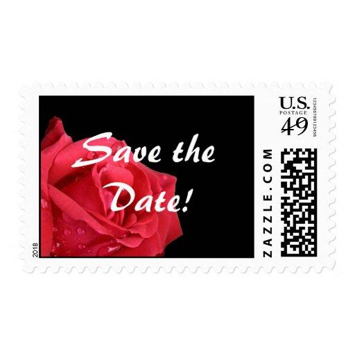 Reserva elegante del rosa rojo el franqueo de la f