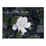 Reserva encantadora del Gardenia la postal de la f
