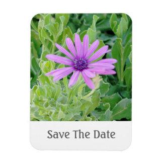 Reserva floral del Gerbera púrpura el imán de la