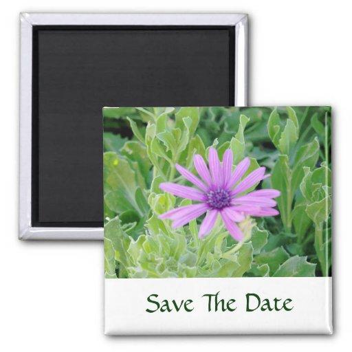 Reserva floral del Gerbera púrpura el imán de la f