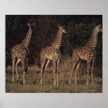 Reserva nacional 3 de Mara del Masai Póster