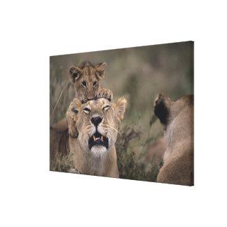 Reserva nacional 4 de Mara del Masai Impresiones En Lona Estiradas