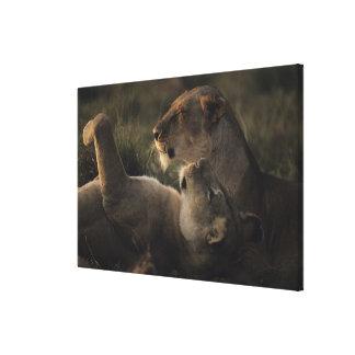 Reserva nacional 5 de Mara del Masai Impresión En Lienzo