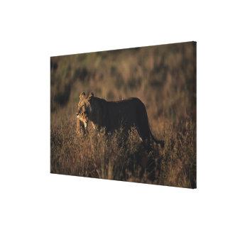 Reserva nacional 6 de Mara del Masai Lona Estirada Galerías