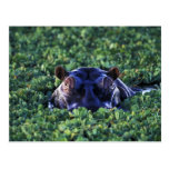 Reserva nacional de Kenia, Mara del Masai Postales