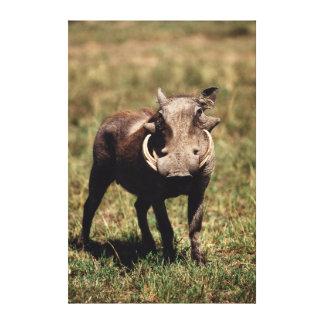 Reserva nacional de Maasai Mara, desierto Warthog Lienzo Envuelto Para Galerias