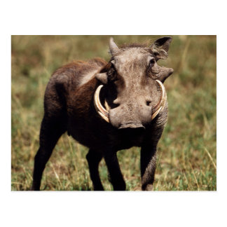 Reserva nacional de Maasai Mara, desierto Warthog Tarjeta Postal