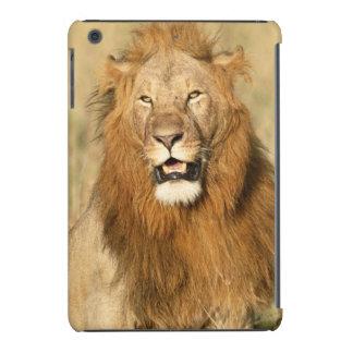 Reserva nacional de Maasai Mara, león masculino Fundas De iPad Mini