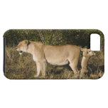 Reserva nacional de Mara del Masai, Kenia Funda Para iPhone SE/5/5s