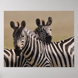 Reserva nacional de Mara del Masai, Kenia, julio d Posters