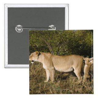 Reserva nacional de Mara del Masai, Kenia Pin Cuadrado