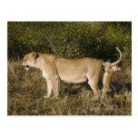 Reserva nacional de Mara del Masai, Kenia Postal