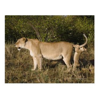 Reserva nacional de Mara del Masai Kenia Postales