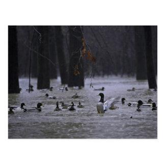 Reserva nacional del río Blanco Arkansas Tarjetas Postales
