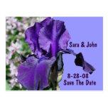 Reserva púrpura de la flor del iris la postal del