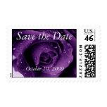 Reserva púrpura del rosa la fecha envio