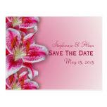 Reserva rosada del Stargazer la postal de la fecha